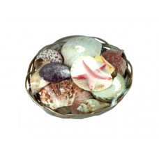 Decorative Seashells in Basket